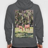 Horse And Foal Feeding I… Hoody