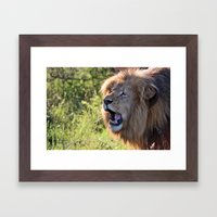 Growling Lion Framed Art Print