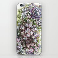 Stonecrop iPhone & iPod Skin