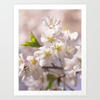 Cherry Blossoms In The S… Art Print