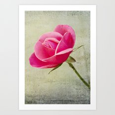 Virgin Rose Art Print