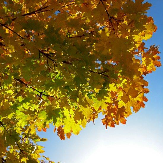 autumn tree III Art Print