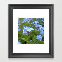 forget-me-not flowers II Framed Art Print