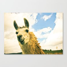 No Drama Llama Canvas Print