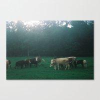 Cowz Canvas Print