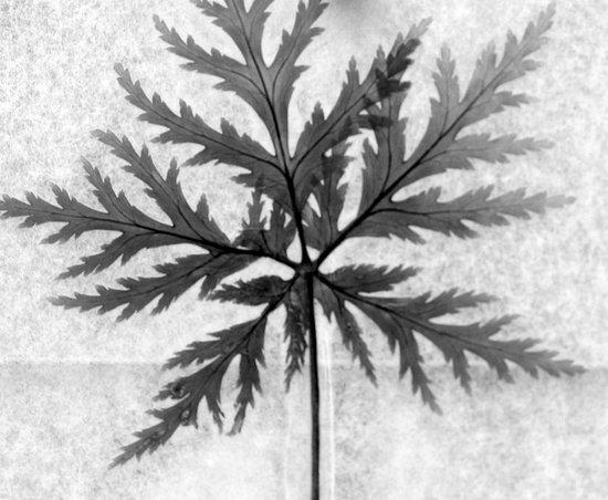 last leaf of summer Art Print