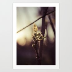 Raspberry sprout Art Print
