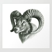 The mouflon G125 Art Print