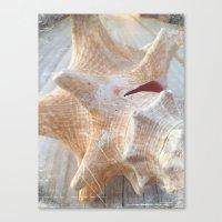 Conch Canvas Print