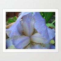Open Iris Art Print