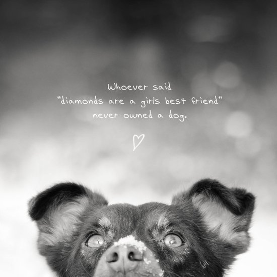 best friend - a dog Canvas Print