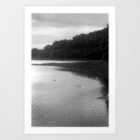 Peace Of Swan Lake Art Print