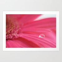 Pink Tear Drop Art Print