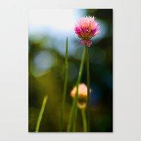 Allium2 Canvas Print