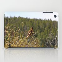 Red-tailed Hawk In The T… iPad Case