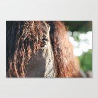 Sunrise Stallion Canvas Print