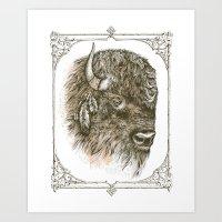 Portrait of a Buffalo Art Print