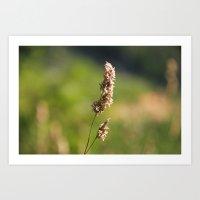 Mountain Grass Art Print