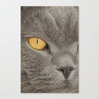 Canvas Print featuring Mister Claude by Fran Walding