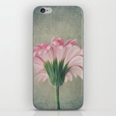 Flat Pink Gerbera Textured iPhone & iPod Skin