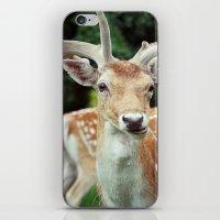 Deer Me iPhone & iPod Skin