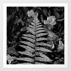 fern leaf VI Art Print