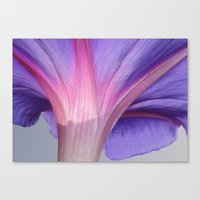 Macro of a Pale Liliac and Pink Morning Glory Canvas Print