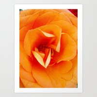 Orange Rose Art Print
