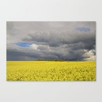 Fields Of Gold Canvas Print