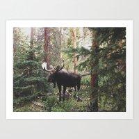 The Modest Moose Art Print