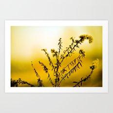 Lemon Yellow Sun Flower Art Print