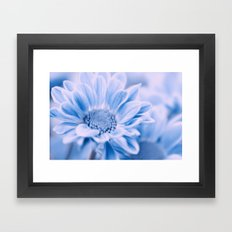 Aster Blue 103 Framed Art Print