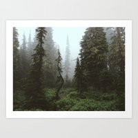 Rainier Forest Art Print