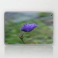 Lone Blue-Purple Anemone Laptop & iPad Skin