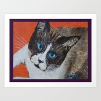 Rastus The Snowshoe Cat Art Print