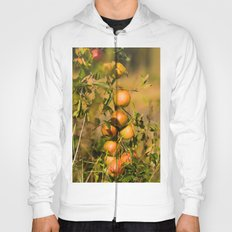 Fresh apples from the tree Hoody