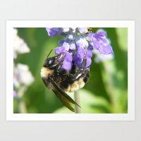 Hanging Bee Art Print