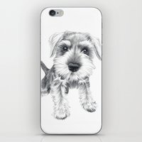 Schnozz the Schnauzer iPhone & iPod Skin