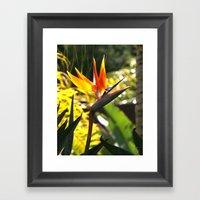 Bird of Paradise II Framed Art Print