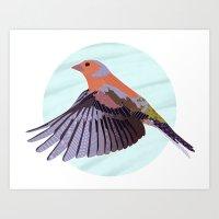 Chaffinch In Flight Art Print