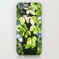 Light in the leaves iPhone 6 Slim Case