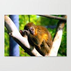 Monkey Sleeping Canvas Print