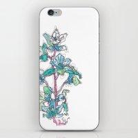 Calahan's Orchids iPhone & iPod Skin