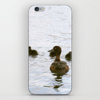 Ducklings In The Water iPhone & iPod Skin