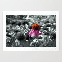 Single Cone Flower Art Print
