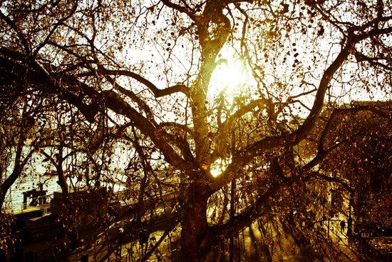 Tree see-through.... Canvas Print