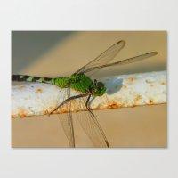 Dragonfly 2011 Canvas Print