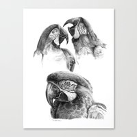 Macaw Study SK0114 Canvas Print
