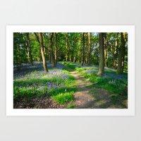Bluebell Woods Art Print