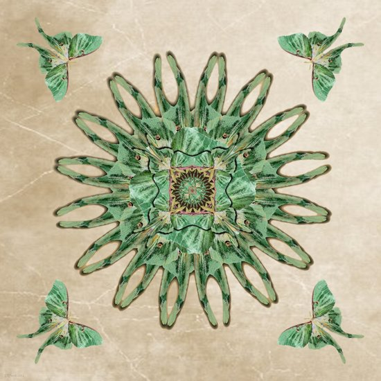 Luna Moth Circle  Art Print
